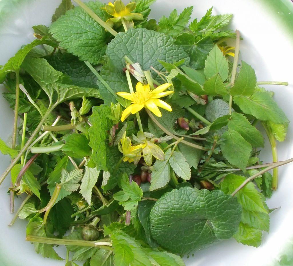 wild spring salad