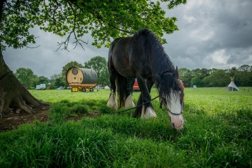 Horse in field by tree, wagon